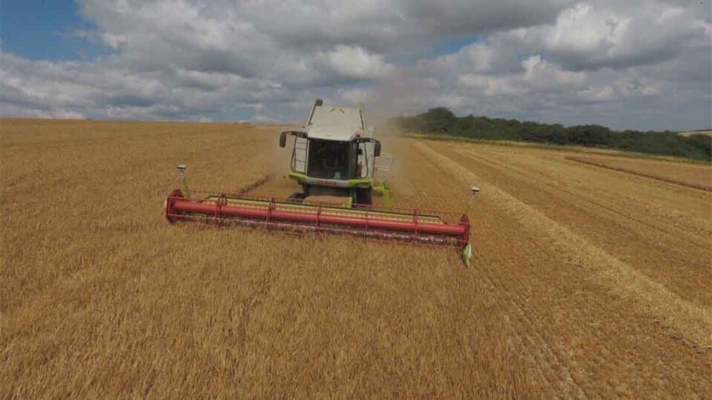 Claas combine making progress in Dorset - Todd Jex