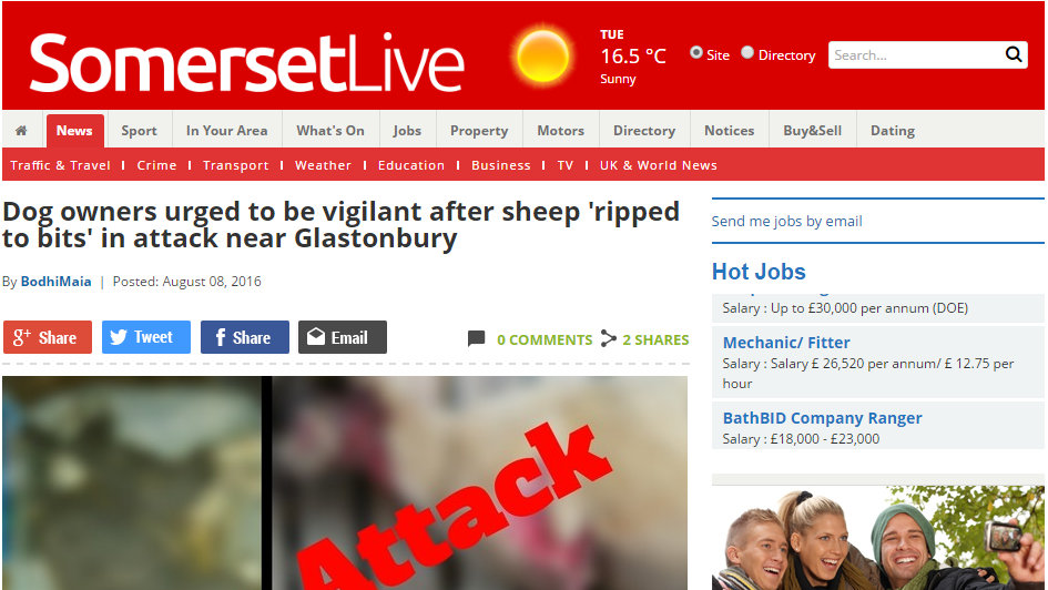 Dog owners urged to be vigilant after sheep 'ripped to bits' in attack near Glastonbury