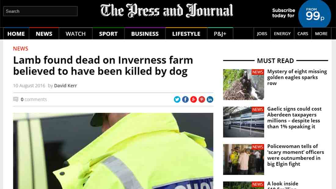 Lamb found dead on Inverness farm believed to have been killed by dog
