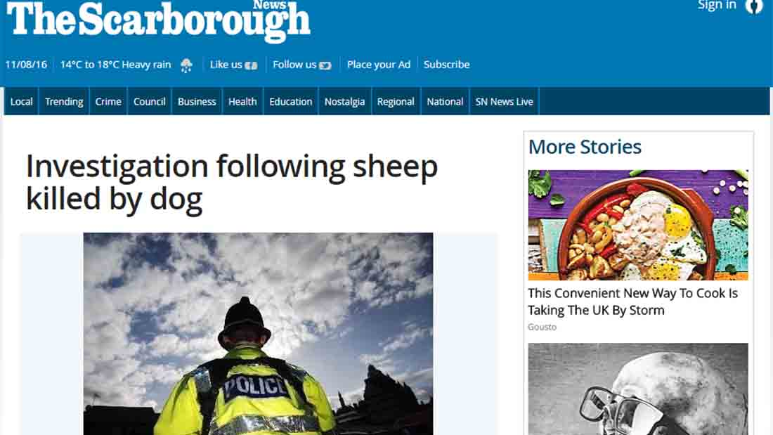 Investigation following sheep killed by dog