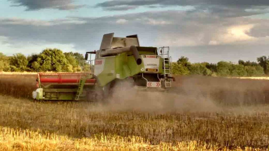 Oilseed rape variety, Amelia being harvested in Lincolnshire - Ron Granger