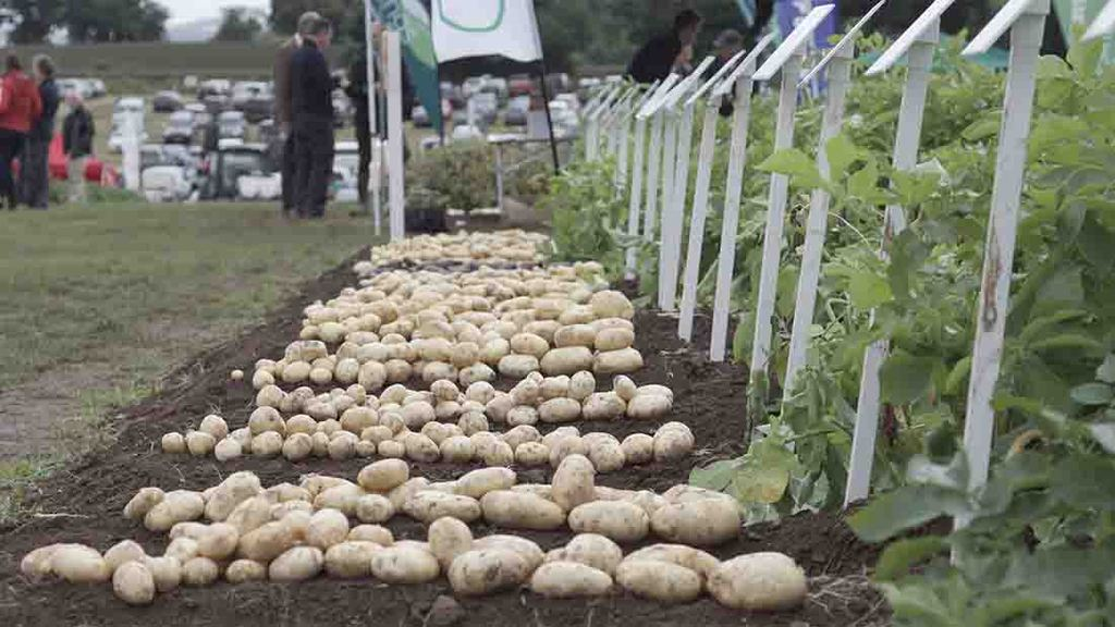 Potatoes in Practice event showcases latest industry developments