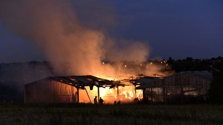 Ten calves killed in suspected arson attacks