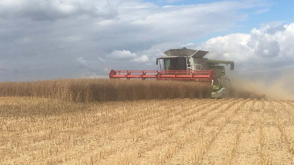 Incentive Oilseed rape being harvested in Nottinghamshire - Ian Holmes