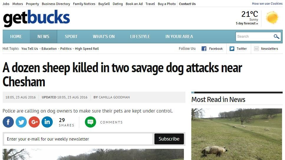 A dozen sheep killed in two savage dog attacks near Chesham