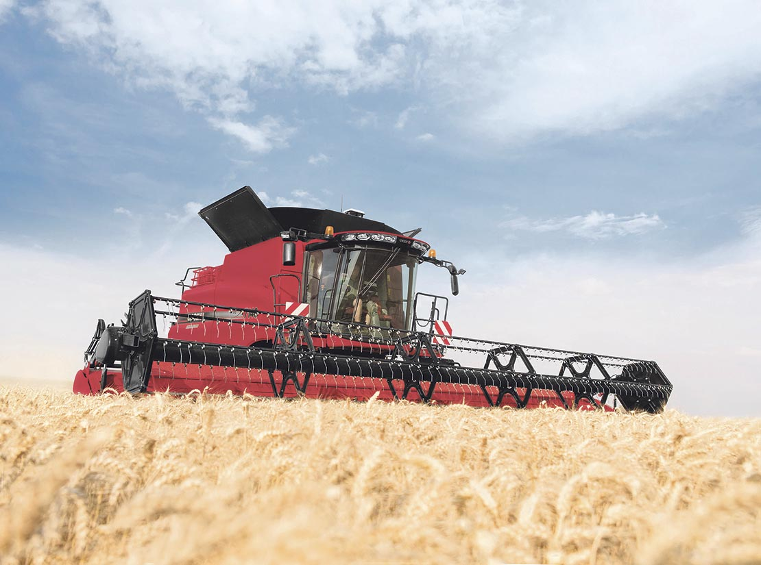 Wheat quality better than yield