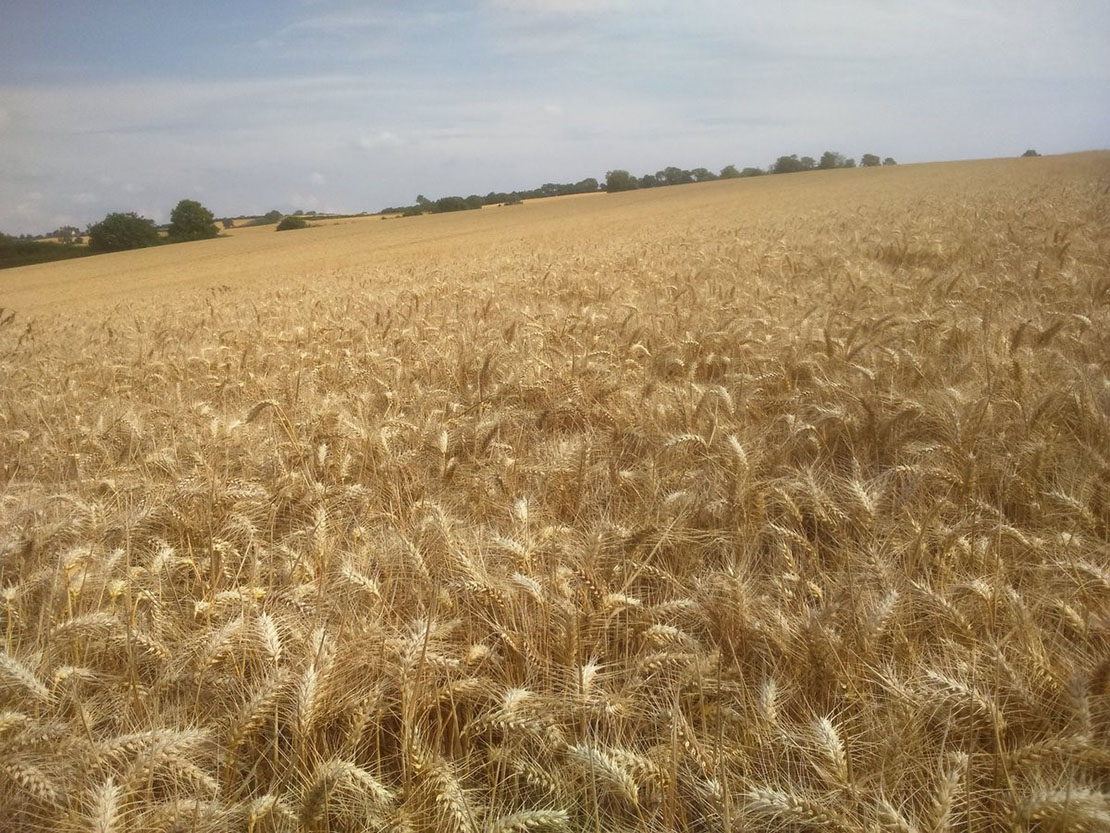 'Only a few hours away from combining these loaves of bread' tweeted Phil Jarvis as part of #Farm24