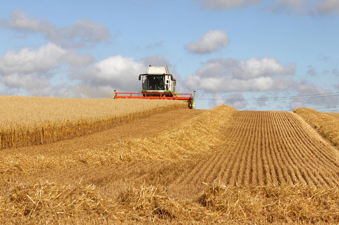 Straughan contractors cutting oats in the North East - Mick Vardy