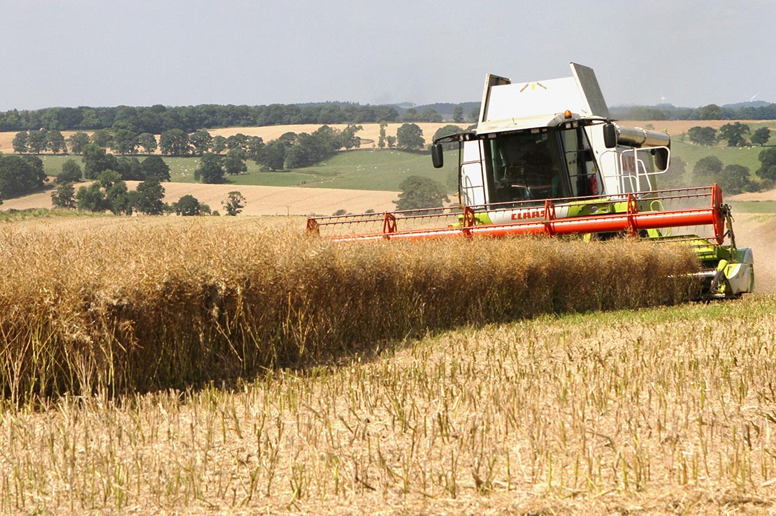 Excalibur OSR being harvested at Errington Farm - Mick Vardy