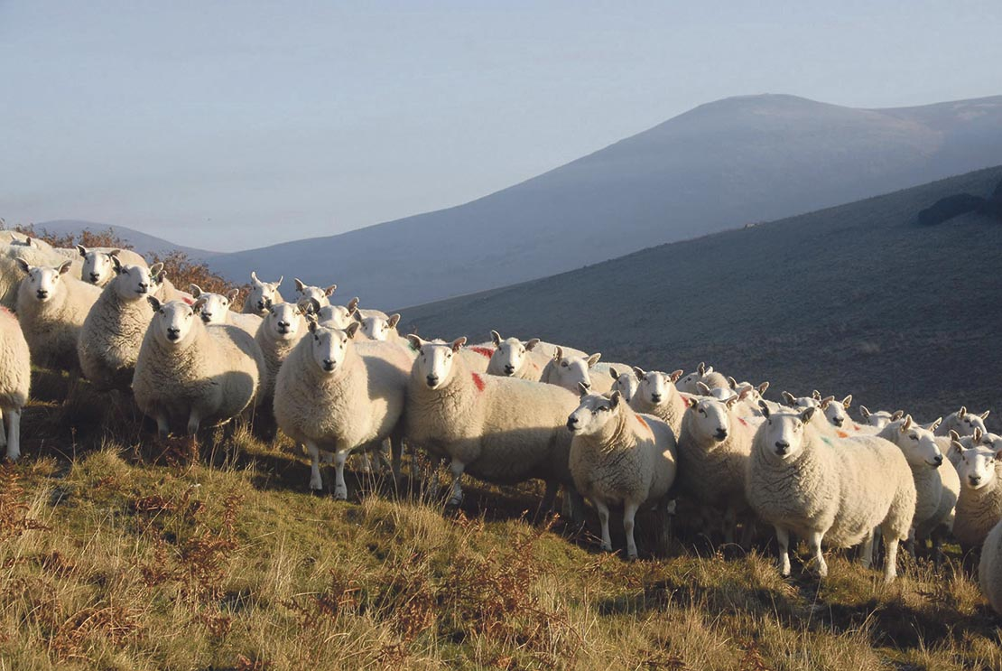 The Scottish sheep industry is currently worth about £200 million a year