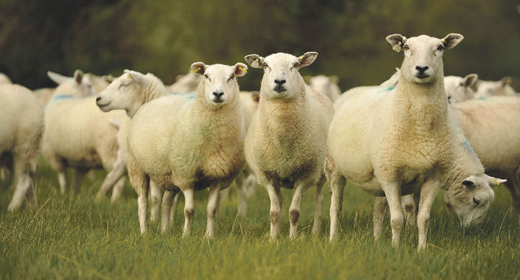 NSA event to inspire young sheep farmers of the future