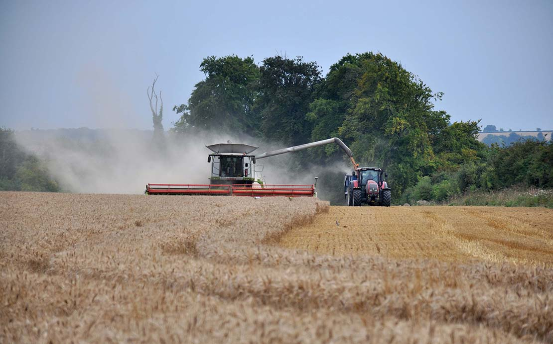Gathering the last of the winter wheat at Nugent Farms, Lambourn - Sara Bartlett