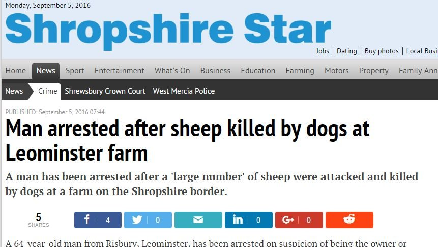 Man arrested after sheep killed by dogs at Leominster farm