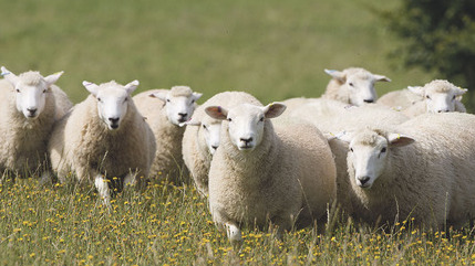 Sustainable relationships with buyers key to growing breeding unit