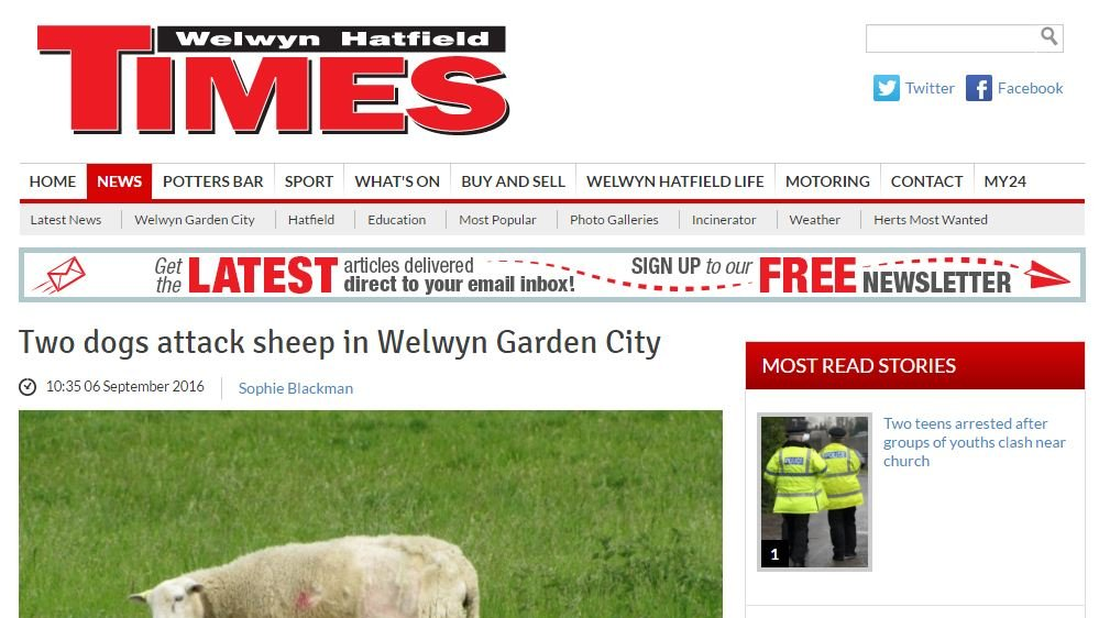 Two dogs attack sheep in Welwyn Garden City