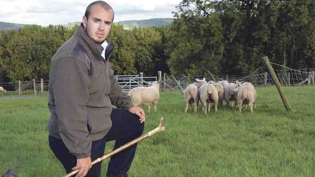 Dog trainer pleads guilty to dog attack which killed 36 ewes