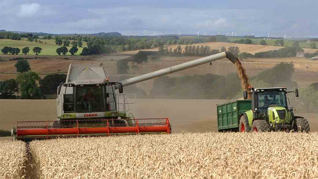 Wheat crop better than expected at Errington Farm, Hexham - Mick Vardy