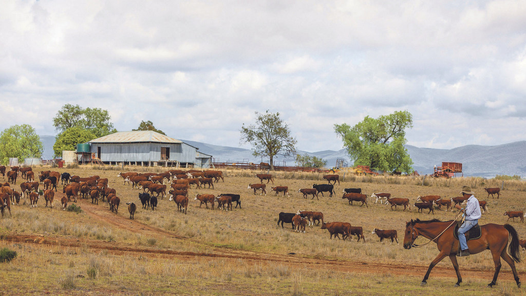 Australian farmers hit hard after years of drought