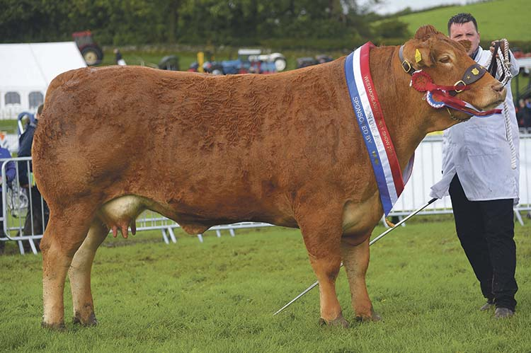 The five-year-old cow Whinfellpark Glittered takes the supreme beef championship