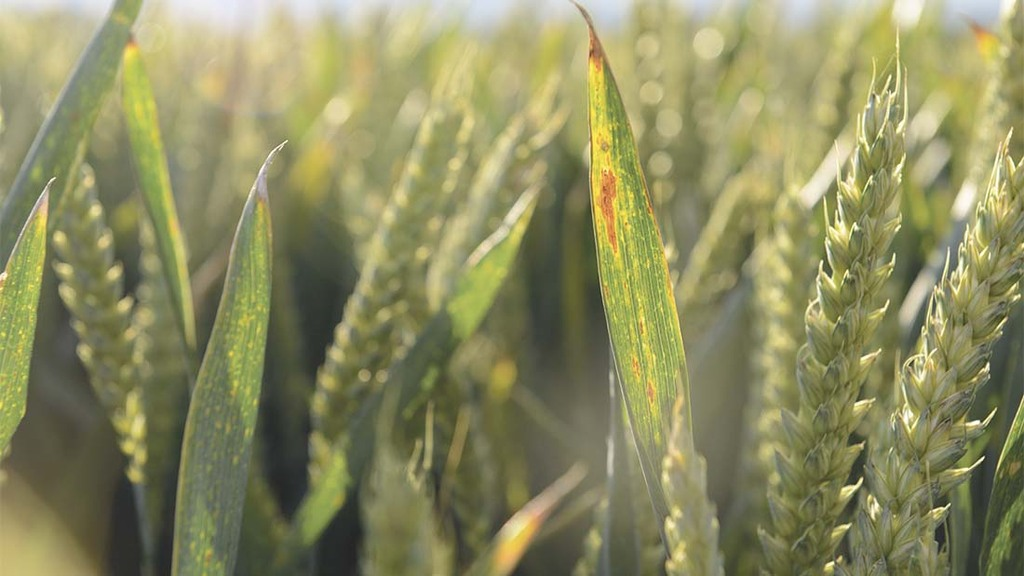 Cereals 2019: App to optimise pyrethroid timings announced