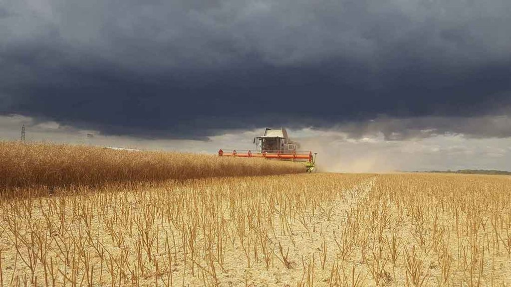 Cloudy skies loom in Norfolk during OSR harvest - Ashley Day