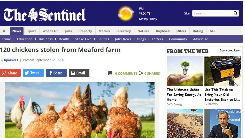 120 chickens stolen from Meaford farm