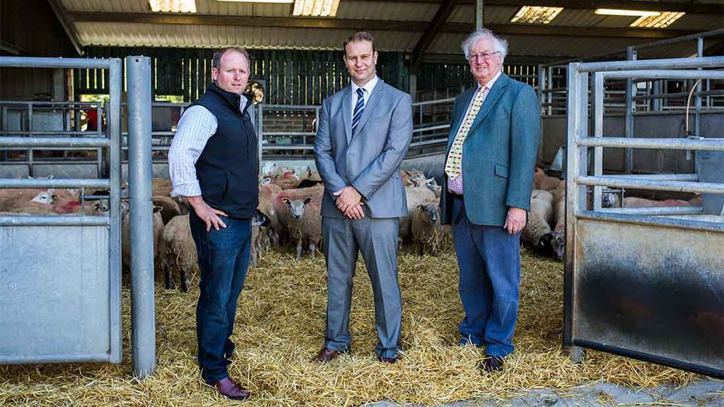 New scheme to give lamb producers access to guaranteed bonuses