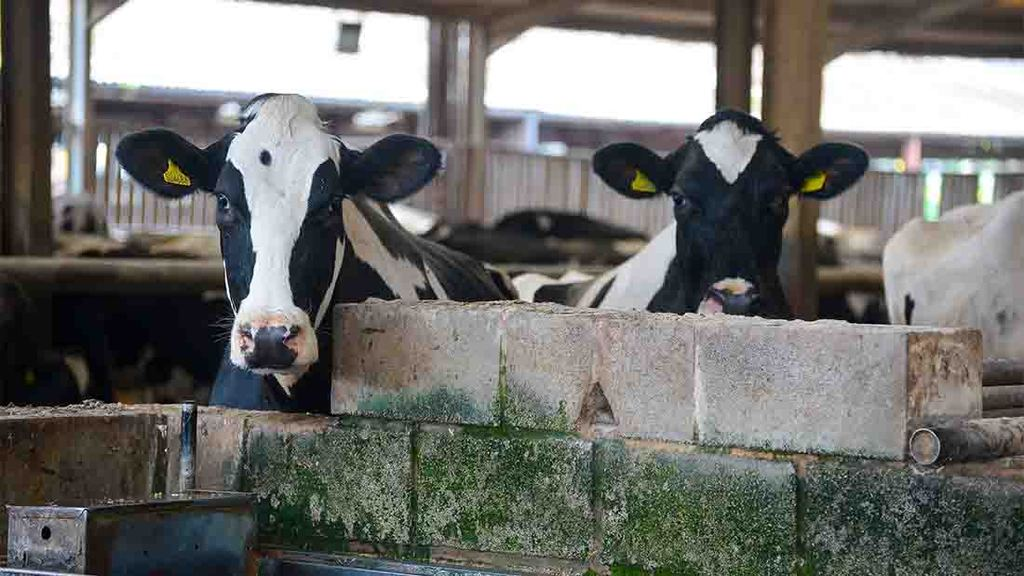 Dairy farmers urged to speak up against 'imbalance of power' in supply chain