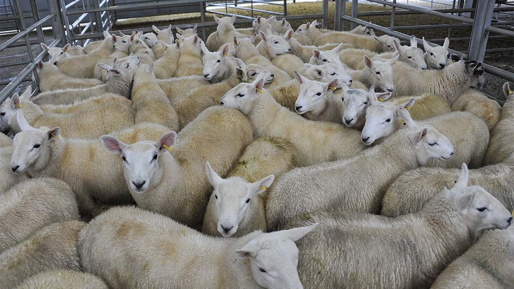 Marks and Spencer to extend its UK lamb sourcing policy