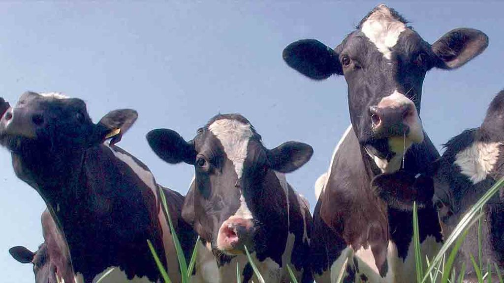 Global milk production falling faster than expected