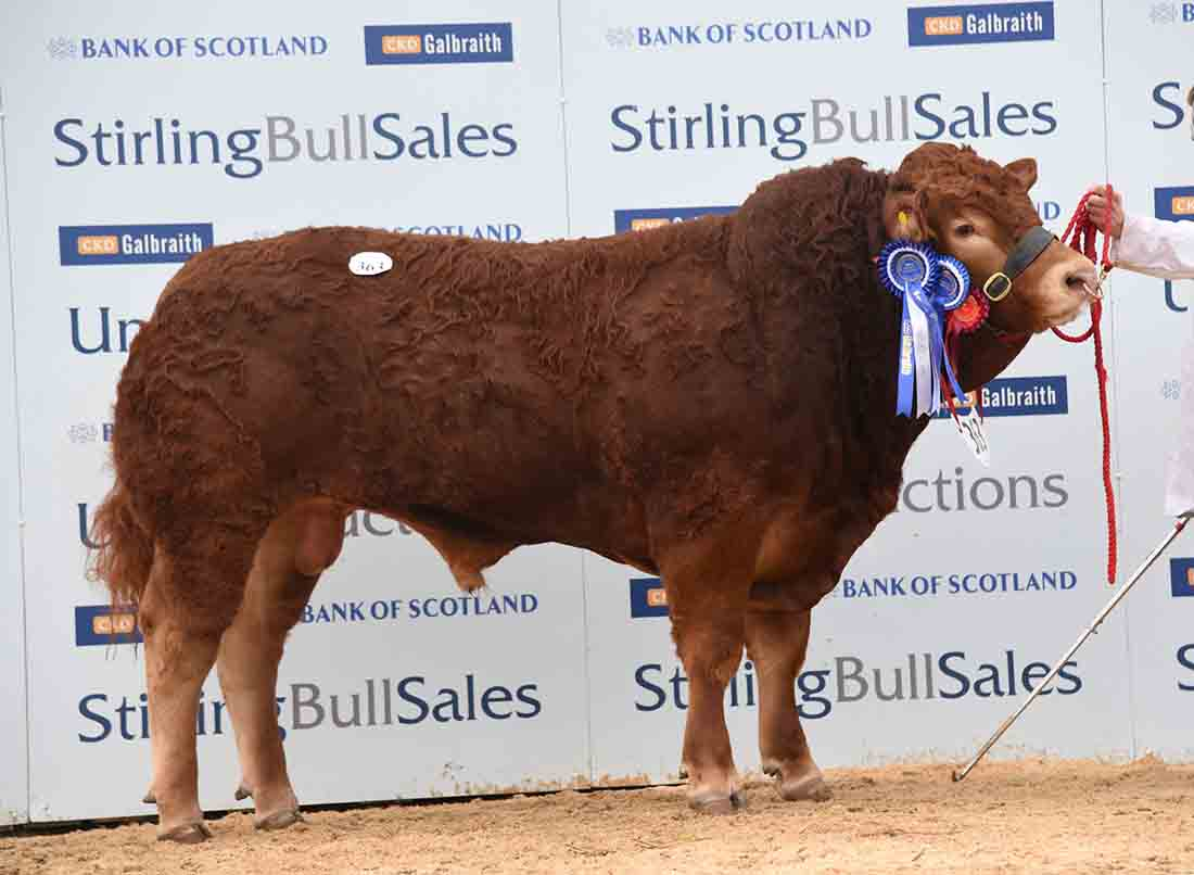 Pre-show reserve is top of the Limousins at Stirling