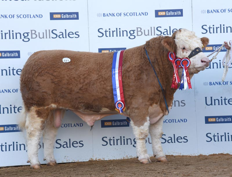 Simmental champion makes 25,000gns at Stirling