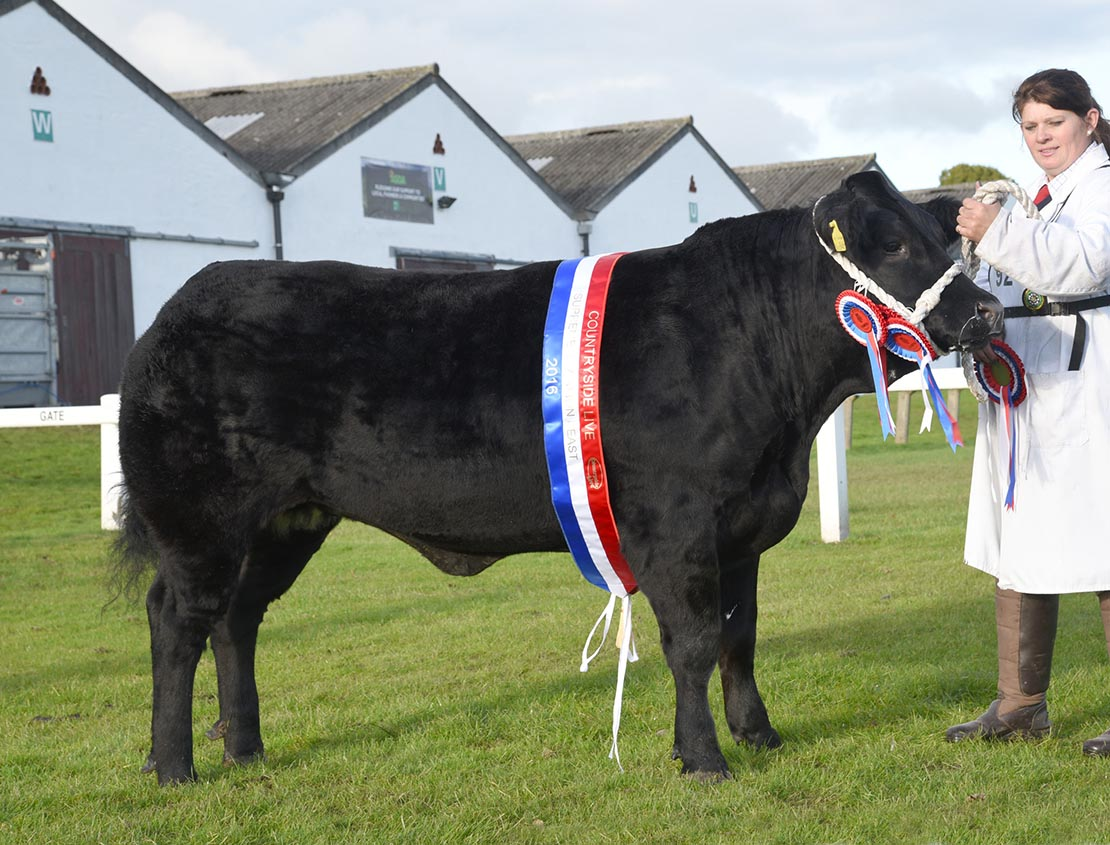 Black Pudding secures beef supreme at Countryside Live
