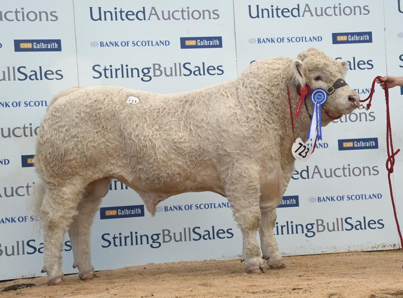 Selective trade as Charolais bulls hit 18,000gns