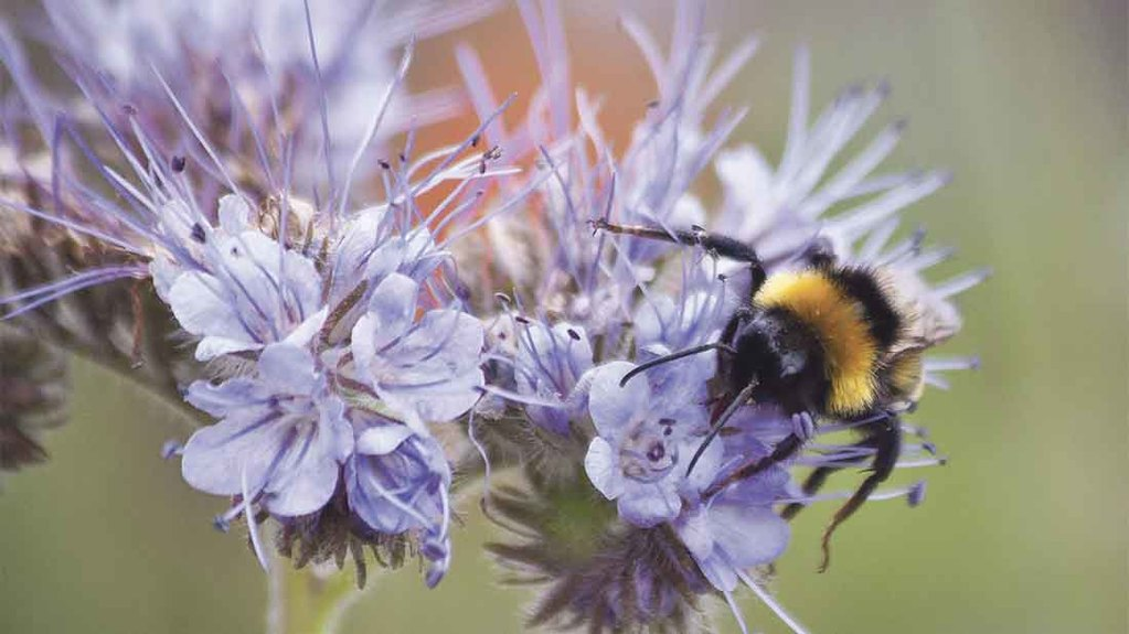 Mustard farmers join forces to protect British honey bees