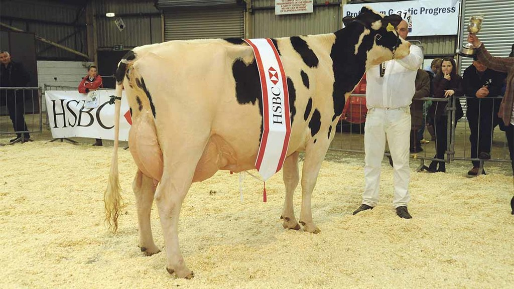 Holsteins reign supreme at Welsh Dairy Show