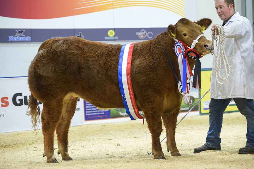 Heifers dominate lineups at Agri Expo