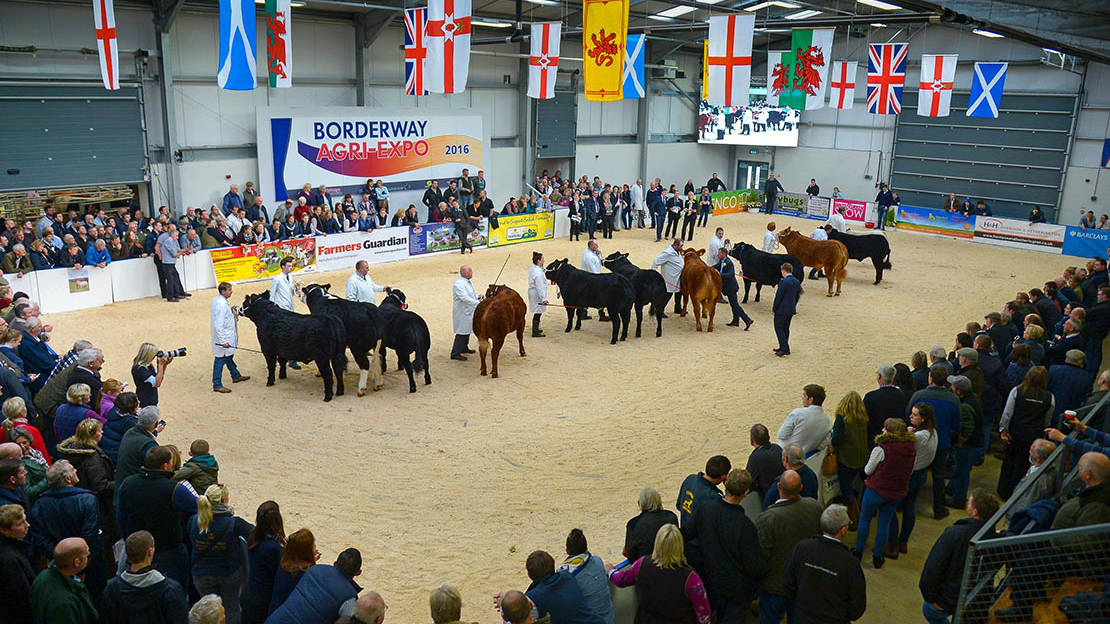 Agri Expo 2016: Pedigree results and photos