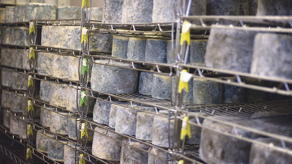Artisan cheese firm faces 'complete closure' following E. Coli outbreak
