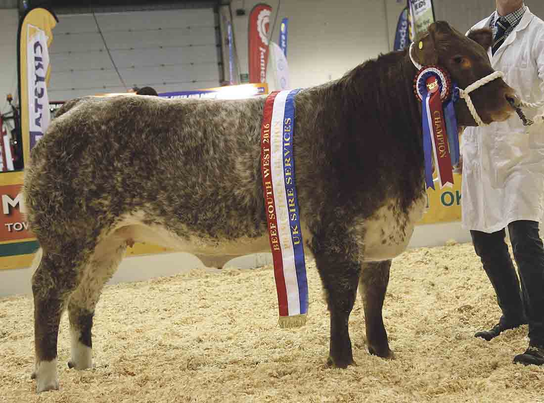 Raspberry Ripple triumphs at Beef South West