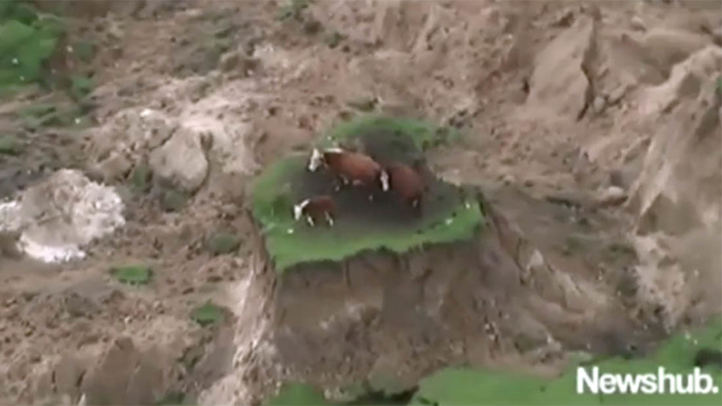 Earthquake could be 'season-ender' for New Zealand dairy farmers