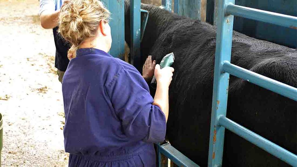 No more TB cattle controls without action on wildlife, say Welsh farming unions