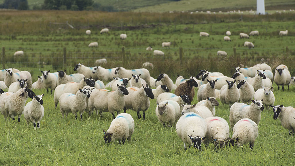 26 sheep drown following suspected dog attack