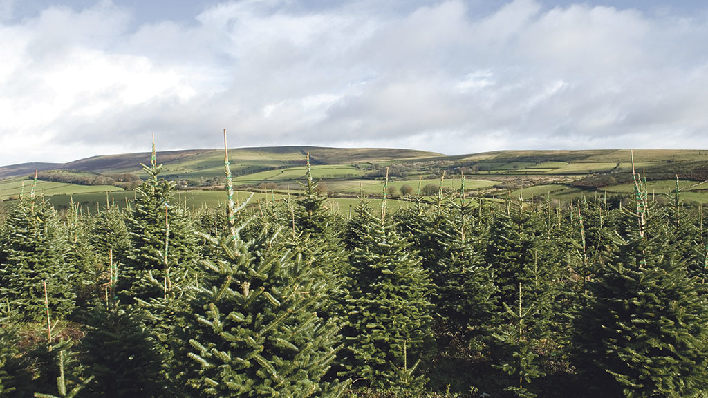 Christmas is big business for tree grower