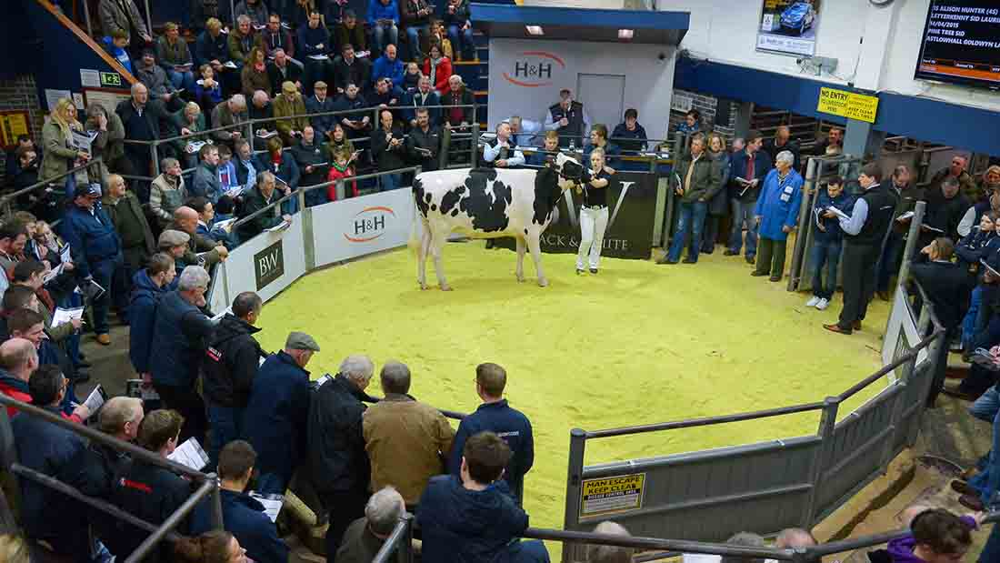 Panda herd sells to 18,000gns high at Carlisle Black and Whites
