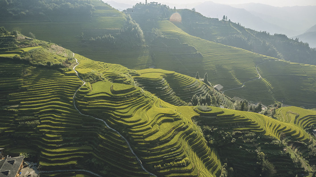 China's agricultural evolution