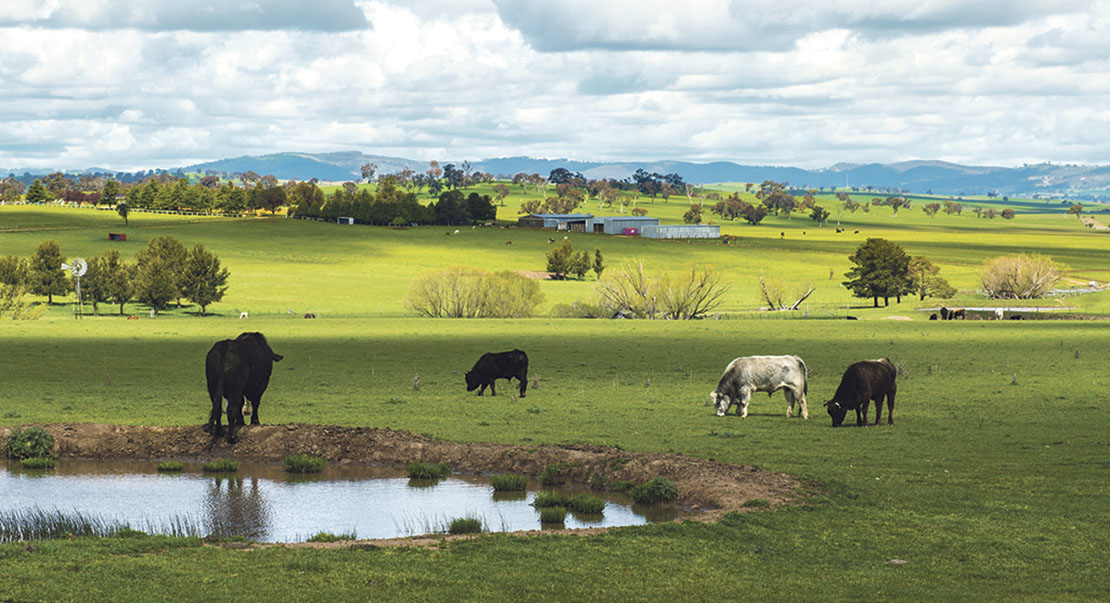 Farming without subsidy – a view from Down Under