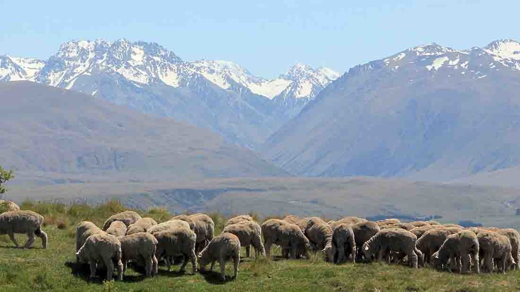 NZ is 'keen' to tell young people of the other available roles in the agricultural industry