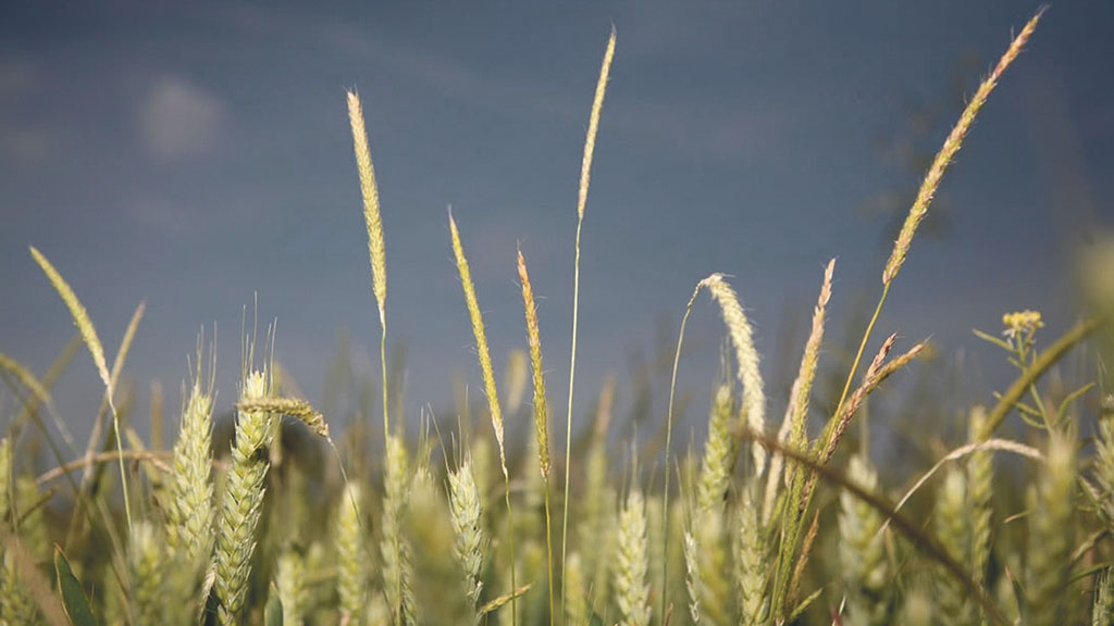 CropTec Show: Continuing the battle against black-grass