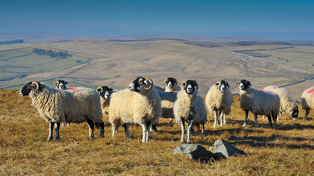 £8m windfall for commoners as legal battle over farm payments is won